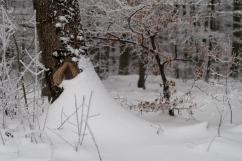 Winter_Jan11-13