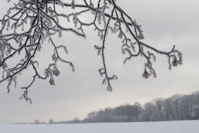 Winter_Jan11-27