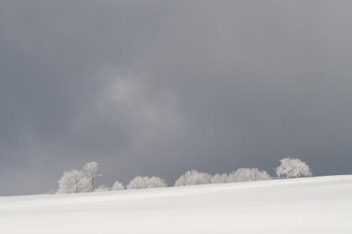 Winter_Jan11-4