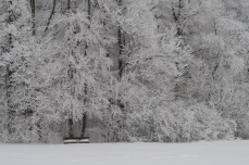 Winter_Jan11-6