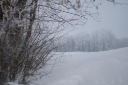 Winter_Jan11-8
