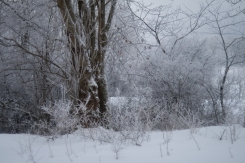Winter_Jan11-9