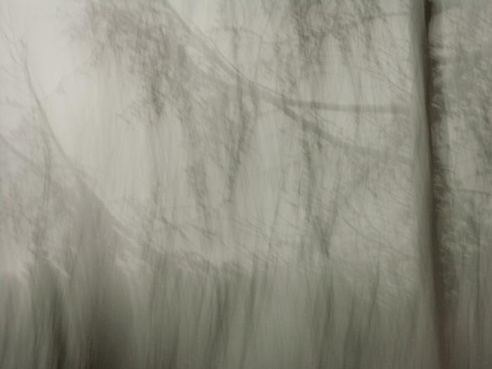Bäume # 03