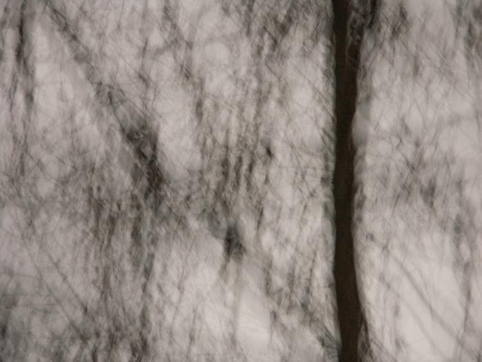 Bäume # 04