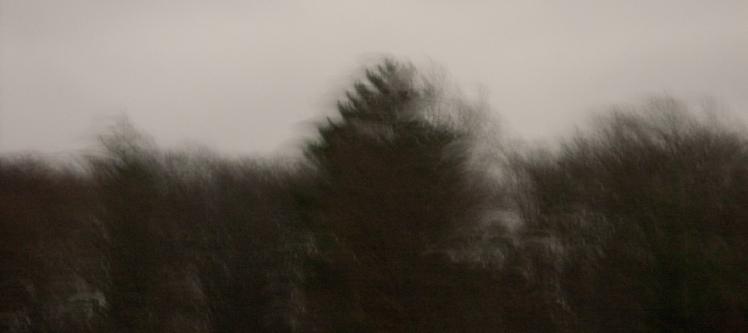 Bäume # 01