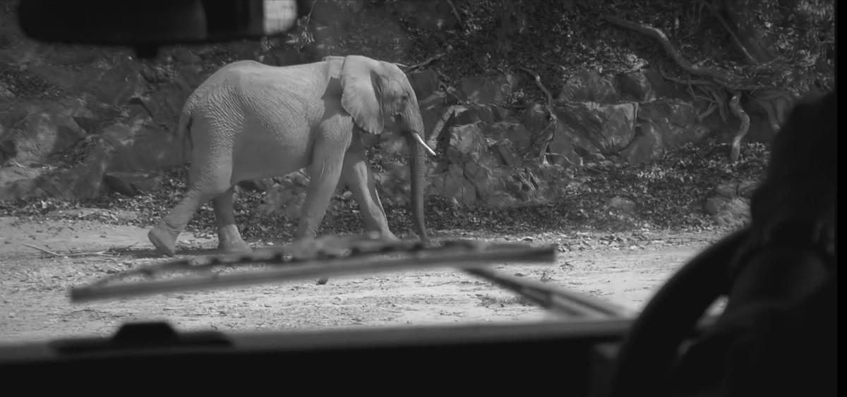 Elefanten - Wildbeobachtung im Etosha National Park/Namibia